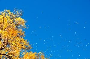 AutumnBoulder